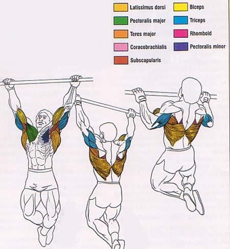 мышцы на турнике